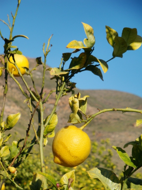 Local lemons
