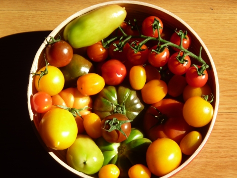 Beautiful bowl of local Toms
