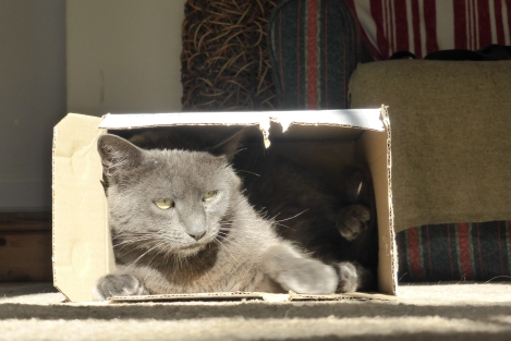 And finally.....Buster in a box