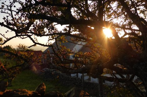 The Beach House at sunset (through the Hawthorn tree)