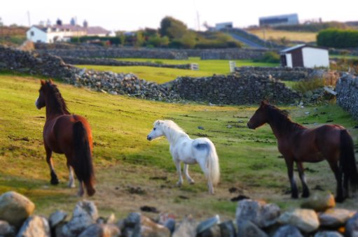 Our neighbourly horses