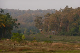 Varnam Homestay was set in some impressive farmland and forests.  The little huts are raised on stilts to ensure the farmers have somewhere to go when a tiger wanders by