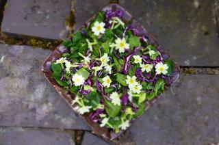 Foragers Salad - Primrose, Sorrel and Dandelion