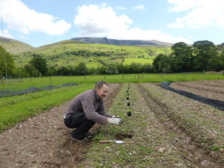 Working on the land yesterday at Trigonos.  Planting some Crown Prince Squash, one of my favourite varities.