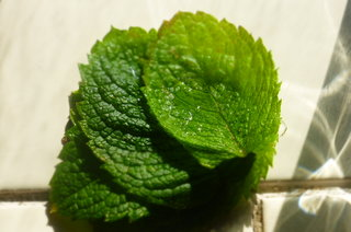 Apple mint from the garden (via Janes Mum and Dad in Stafford)