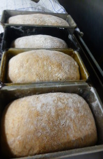 Breakfast loaves at Trigonos, almost ready for the oven