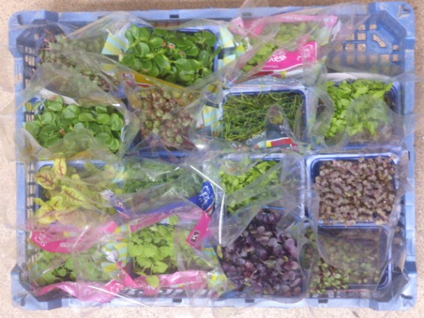 Crazy Cress! Such a diverse range of flavours and colours all wrapped up in tiny, tiny leaves. Very interesting.
