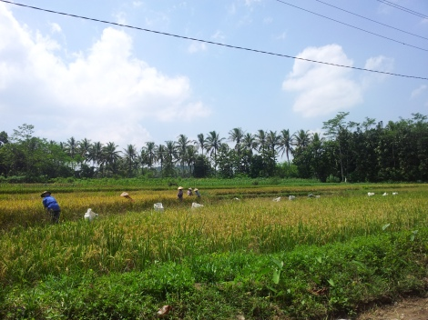 This southern area is known as the garden of Java. Incredibly fertile and beautiful, lush countryside
